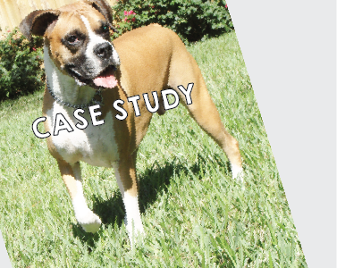 Tail Waggers Case Study